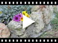 Video from Alpargatas Valencianas Niñas Crochét