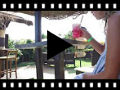 Video from Sandalias Niñas Piel Nobuck y Glitter
