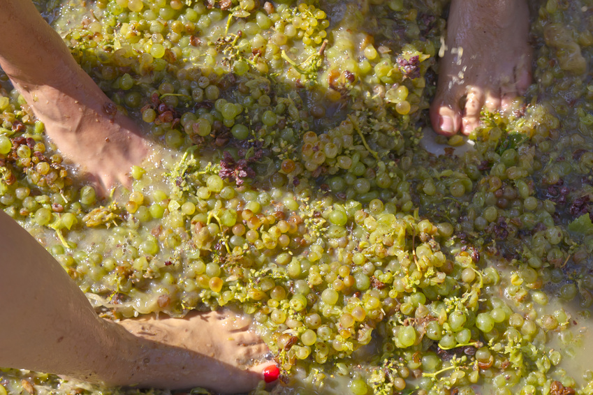 Hacer vino pisando uva