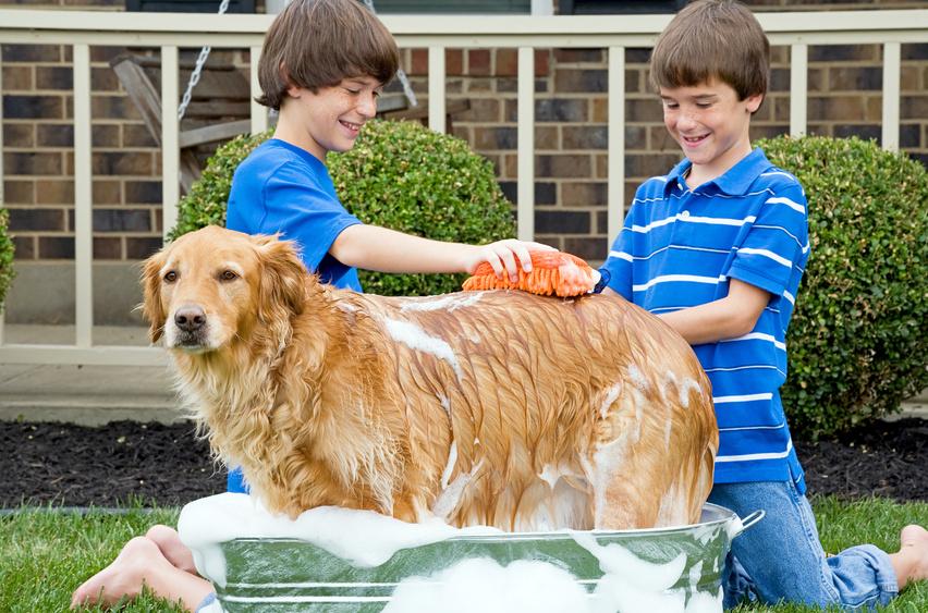 Niños bañando a su perro